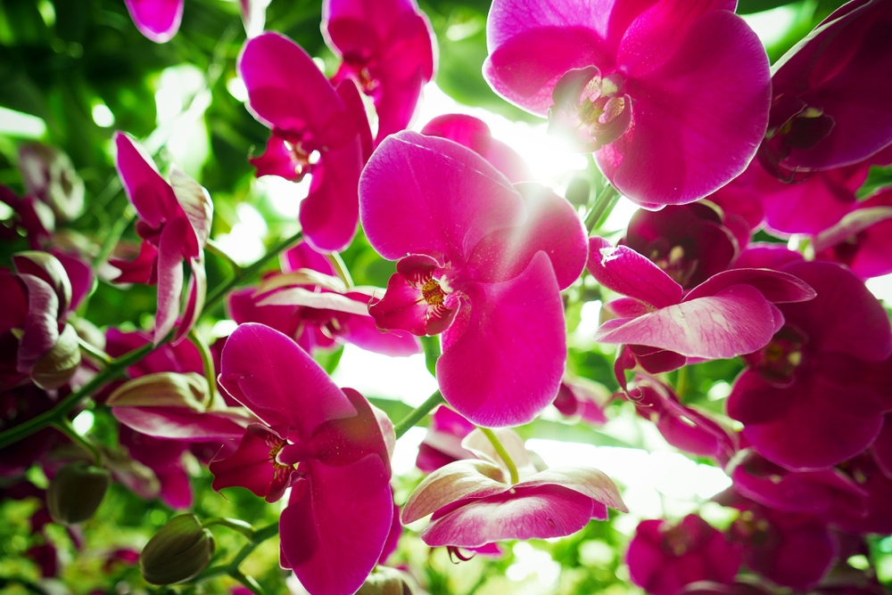 Guide to the Orchid Festival | Des Moines, IA